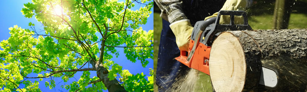 Tree Services Plantation